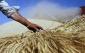 کشاورزی در اسلام