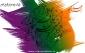 امام محمدباقر علیه السلام